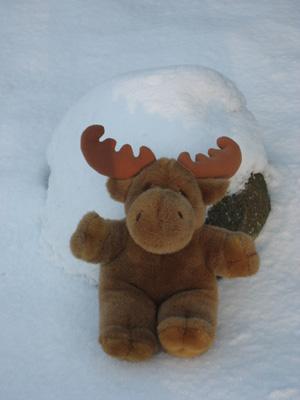 svensson im schnee